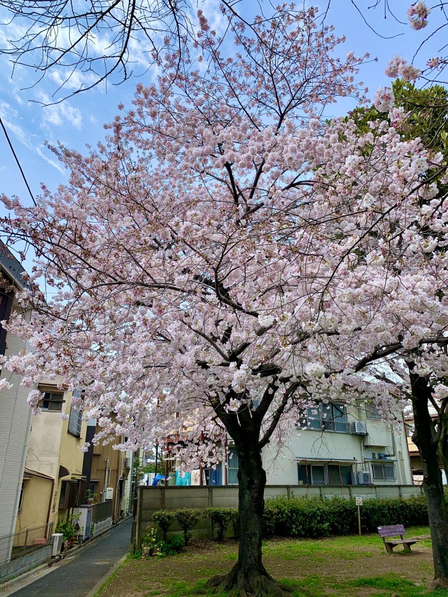 lg-cherry-tree-2-scaled